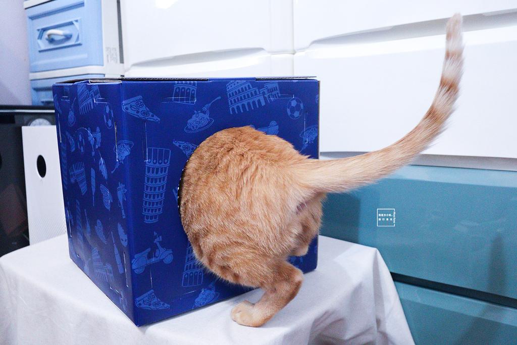 貓無穀飼料推薦18.jpg